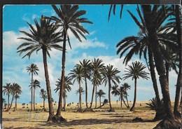 LYBIA - PALMETO - VIAGGIATA 1964 FRANCOBOLLO ASPORTATO - Libia