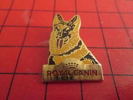 1418c Pins Pin's / Rare & De Belle Qualité  THEME : ANIMAUX / CHIEN BERGER ALLEMAND ROYAL CANIN - Animaux
