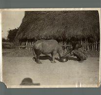AFRICA AFRIQUE 24 * 18 CM Fonds Victor FORBIN 1864-1947 MISSING CORNER SEE SCAN - Africa