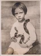 NACIONAL MUSEUW WASHINGTON DC TICHARD G PAINE REPTILES BOA CONSTRICTOR 1921   20 * 15 CM Fonds Victor FORBIN 1864-1947 - Fotos
