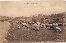 USA TUSCALOOSA SHEEP SCENE MOUTONS - Tuscaloosa