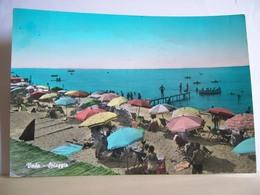 1960 - Livorno - Rosignano Marittimo - Vada - La Spiaggia - Animata - Ed. Masoni Bice - Livorno