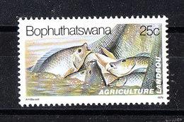 Bophuthatswana  - 1979.Pesca Di Pesci Per Alimentazione.Fish: Fishing For Food. MNH - Alimentazione