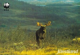 Moose - élan - Eland - Elch - Alce Americano - Alce - (Alces Alces) - WWF Panda Logo - Autres