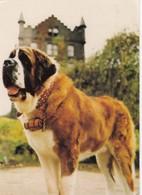 Postcard St Bernard Thor Of The Craiglands Hotel Cowpasture Road Ilkley My Ref  B23620 - Dogs