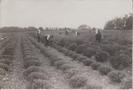 FARMING  FARMERS    15 * 11 CM Fonds Victor FORBIN (1864-1947) - Profesiones