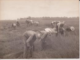 FARMING FARMERS  20* 15 CM Fonds Victor FORBIN (1864-1947) - Mestieri