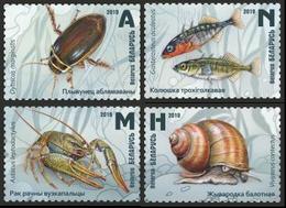 Belarus 2019 Marine Life Shells Fish Etc Set MNH - Marine Life