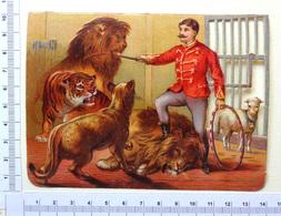 GRAND CHROMO DECOUPI......LION ...TIGRE....  FAUVES  ....LE DOMPTEUR  DÉFEND UN AGNEAU - Animals