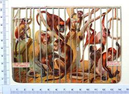 GRAND CHROMO DECOUPI..... LA CAGE AUX SINGES - Animals