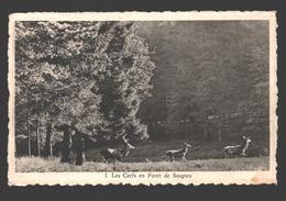 Brussel / Bruxelles - Les Cerfs En Forêt De Soignes - Cerf / Hert / Deer - Forêts, Parcs, Jardins