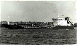 Costanza Wonsild +-14  * 9 CM BARCO BOAT Voilier - Schiffe