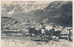 Pâturage Alpestre - Paysans