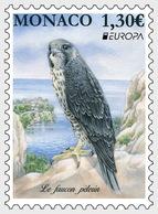 Monaco - Postfris / MNH - Europa, Vogels 2019 - Ongebruikt