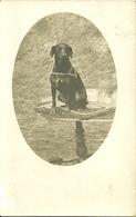 Carte-photo -  CHIEN Sur Un Guéridon - Cani