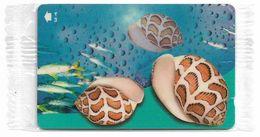 Oman - Sea Shells - Acteon Eloisea - 52OMNJ - 2001, 200.000ex, NSB - Oman