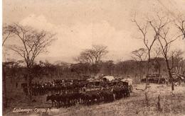 ANGOLA - LUBANGO - Carros Boéres - Angola