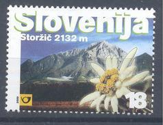 Slovenia Slovenie Slowenien 2000; Alpen-Edelweiß (Leontopodium Nivale Subsp. Alpinum) Edelweiss Mountains Berge Storzic - Pflanzen Und Botanik
