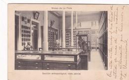MUSEO DE LA PLATA(ARGENTINA) SECCION ANTROPOLOGICA, VISTA PARCIAL. CPA VOYAGEE 1914 - BLEUP - Museen