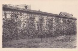 CHATEAU DE FONTAINEBLEAU. LA TREILLE DU ROI. EDIT DES MUSEES NATIONAUX. CPA CIRCA 1920s - BLEUP - Fontainebleau