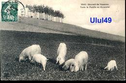 """THEME - ANIMAUX - COCHONS - """" Souvenir De Vacances - Toute La Famille En Excursion """" - Cochons"""