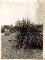 Hibiya Park  Summer Sketch JAPANESE JAPON JAPAN 16 * 12 CM Fonds Victor FORBIN 1864-1947 - Lugares