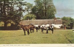 PC73933 New Forest Ponies. Swan Green Near Lyndhurst. Jarrold. RP. 1961 - Cartes Postales