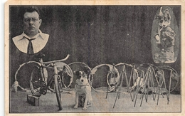 Bobbie Een Wonder Foxhond Charles Boone Brugge - Cirque