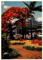CPM - ILE MAURICE - PORT-LOUIS - Flamboyant Devant L'Hôtel Du Gouvernement (Arbre) - Mauritius