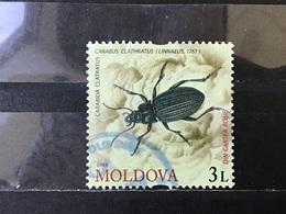 Moldavië / Moldova - Insecten (3) 2009 - Moldavië
