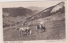 74  Au Col  Des Aravis Un Paturage Et Le Mont  Lachat - France