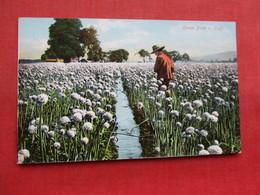 Onion Field In California      Ref 3358 - Flowers