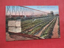 Strawberry  Field In California      Ref 3358 - Flowers