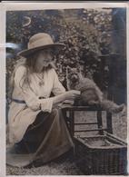 CROYDON CAT SHOW MISS M RYCOTT  BLUE PERSIAN CAT RYCOTT BARON GATO CHAT KAT CAT  20* 15CM Fonds Victor FORBIN - Fotos