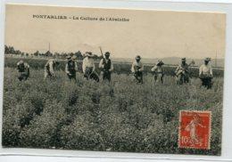 25 PONTARLIER La Culture De L'ABSINTHE  Agriculture Paysans Au Champ écrite Timbrée    D07 2019 - Pontarlier