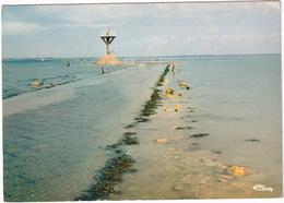 Ile De Noirmoutier - Le Reflux Découvrant Le Passage Du Gois -  (Vendée) - Ile De Noirmoutier