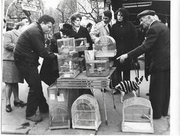 PARIS - ÎLE De La CITE - Le MARCHE Aux OISEAUX - Vers 1970 - Photo Presse - A Voir ! - Lieux