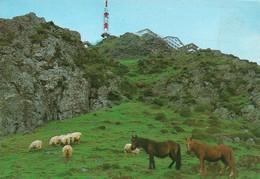 Espagne Larun Gain Versant Espagnol Avec Chevaux Cheval (2 Scans) - Cavalli