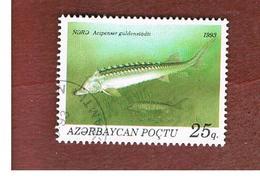 AZERBAIJAN   - SG 112 -  1993 FISHES: RUSSIAN STURGEON  -   USED - Azerbaijan