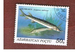 AZERBAIJAN   - SG 113 -  1993 FISHES: STELLATE STURGEON  -   USED - Azerbaijan
