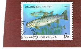 AZERBAIJAN   - SG 116 -  1993 FISHES: CASPIAN TROUT  -   USED - Azerbaïjan