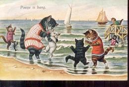 Poes - Water - 1930 - Katten
