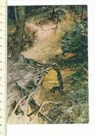 50918 - ORROIR NATUURSCHOON OP DE KLUISBERG - Mont-de-l'Enclus