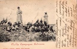PADOVA MELLA CAMPAGNA PADOVANA  (CARTE PRECURSEUR ) - Padova (Padua)