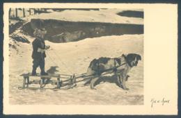 Attelage De Chien Dog Luge Enfant Child Carte Photo - Chiens