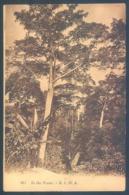 Ghana GOLD COAST Arbres Exotiques Trees - Ghana - Gold Coast