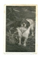 W21-Vintage Photo Snapshot-Dog Stands In Front Low Wire They Stare Looking Observe - Anonymous Persons