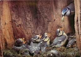 Animaux - Oiseaux - Mésange Bleue - Nid - Oisillons - Nourissage - Carte Neuve - Voir Scans Recto-Verso - Oiseaux