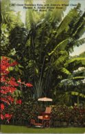 Florida Fort Myers Thomas A Edison Winter Home Giant Travelers Palm And Edison's Wheel Chair Curteich - Fort Myers