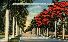Florida Fort Myers Royal Poinciana Trees And Royal Palms Along First Street - Fort Myers